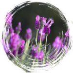 kreatywnosc-lavendar-54