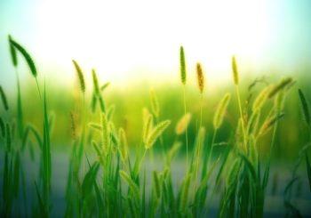 Wpływ COVID19 na zmianę klimatu i odnowę świata
